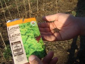 Organic Seeds Lettuce