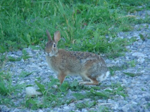 Again at the end of the day the hare was telling us good night :)