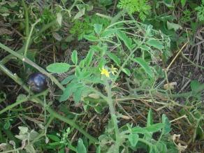 DSC01316 sept and they stil hv flowers