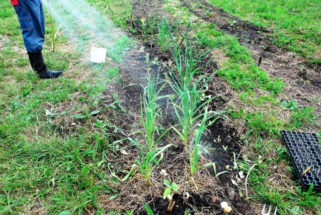 DSC_0177 water it in the spring