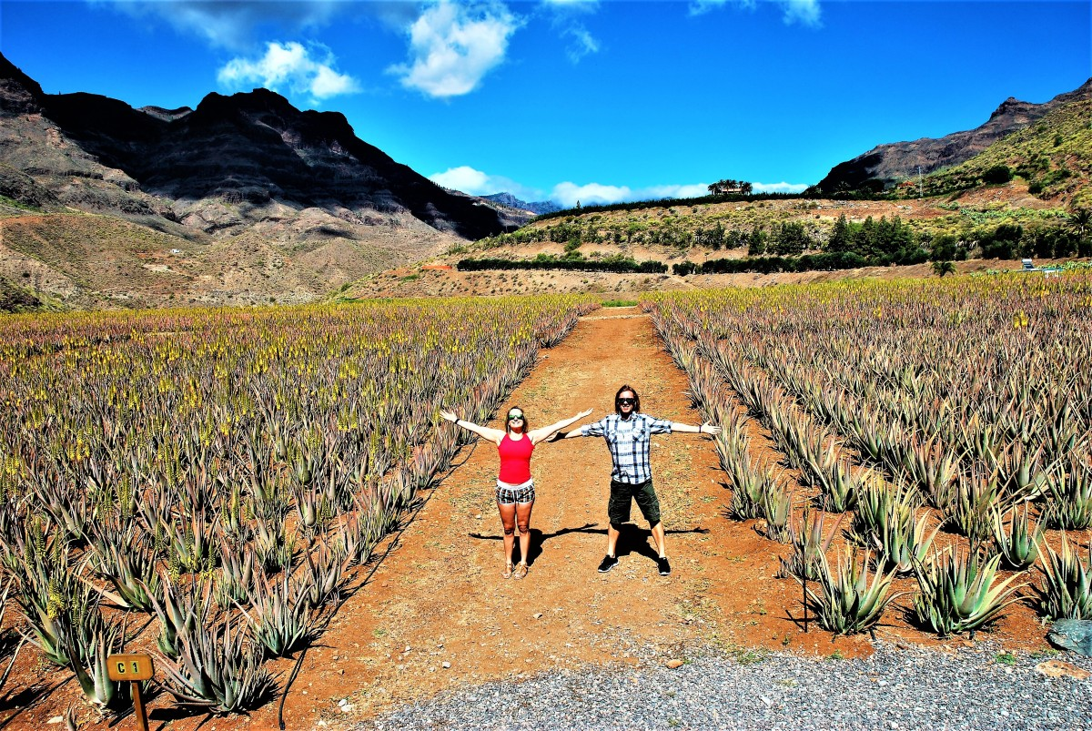 Welcome to Organic Aloe Vera Farm